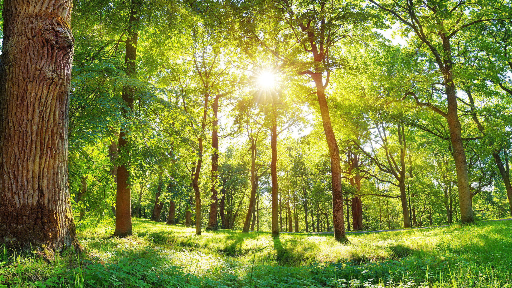 Nachhaltige + ökologische Drucksachen